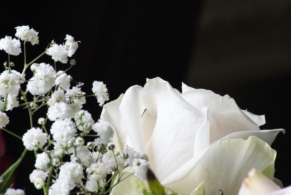 a várakozás folyamata: áldott állapot A várakozás folyamata: áldott állapot virag feher rozsa